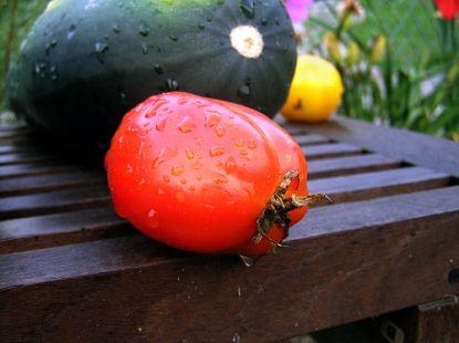 Tomate und Zucchini © Flickr / conormac