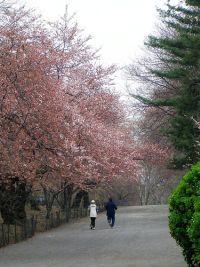 Jogger im Frühling © Flickr / tanakawho