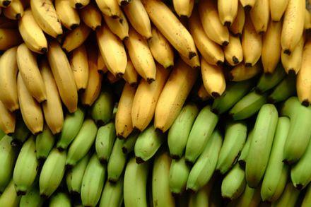 Reife Bananen haben eine gelbe Farbe. Gründ Bananen dagegen sind unreif und nur in gekochtem Zustand genießbar. © Flickr / ian_ransley