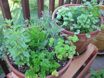 Frische Kräuter werten jeden Salat auf. © Flickr / thomas pix