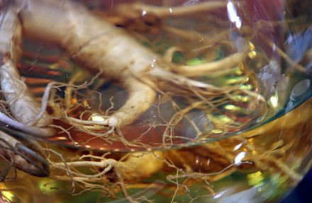 Im unverarbeiteten Zustand wirkt Ginseng unscheinbar, wie jede andere Wurzel auch. © Flickr / centralasian