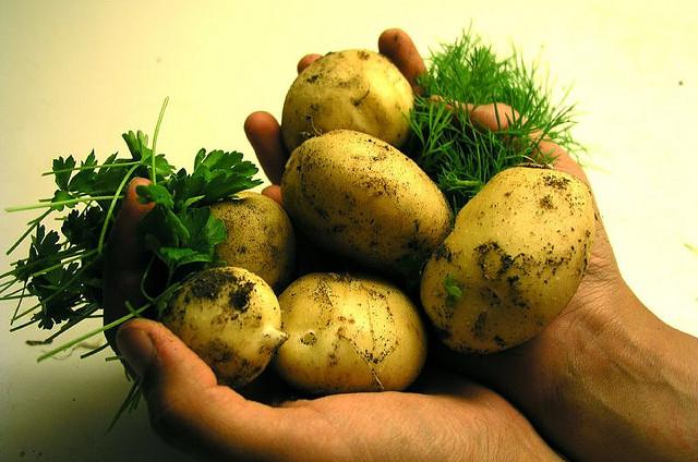 Kartoffeln ©Flickr Dr. Hemmert
